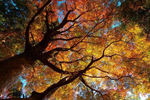 autumn, branches, nature and trees