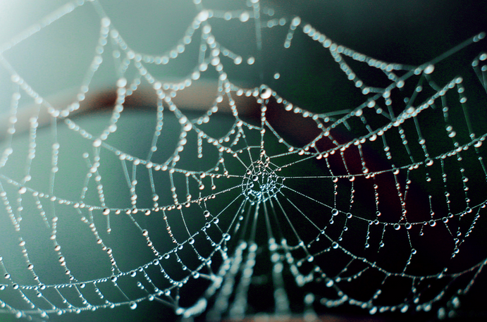 dew, insect, morning, nature, spider, web