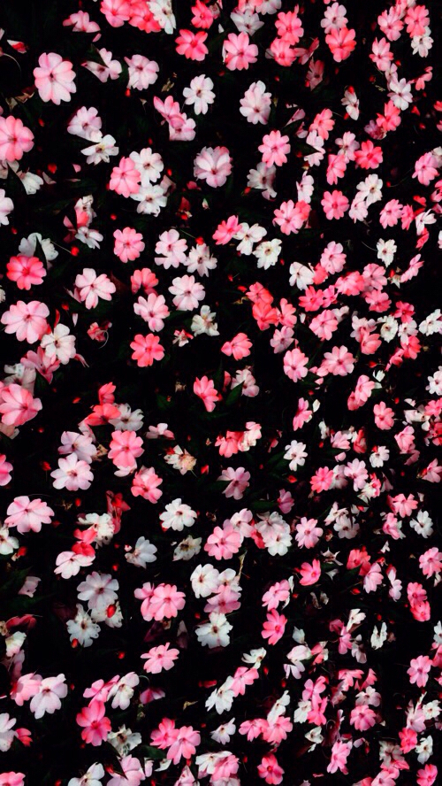 Black Cute Flowers Perfect Phone Pink Wallpaper Iphone