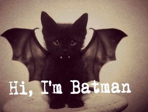 bat, batman, be yourself, cat, dream big, happy couple, smile, sweet, little rebel, all black everything, my little, badwoman
