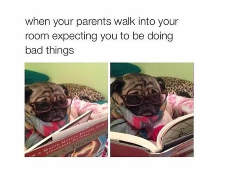 expecting, funny, parents, pug, read, reading, seriously, that moment, do bad things, your room