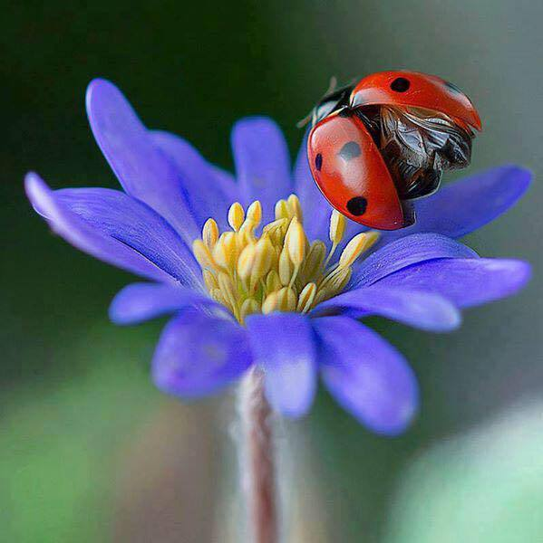 flowers, insect and ladybird
