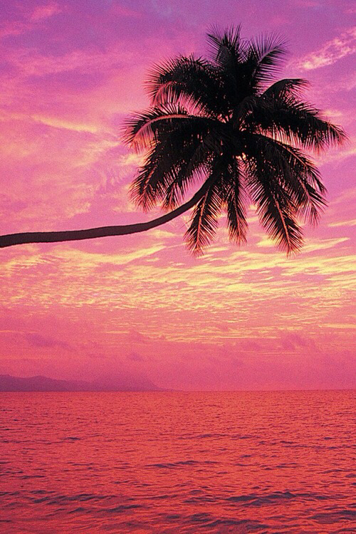 palm, palm trees, pink and summer