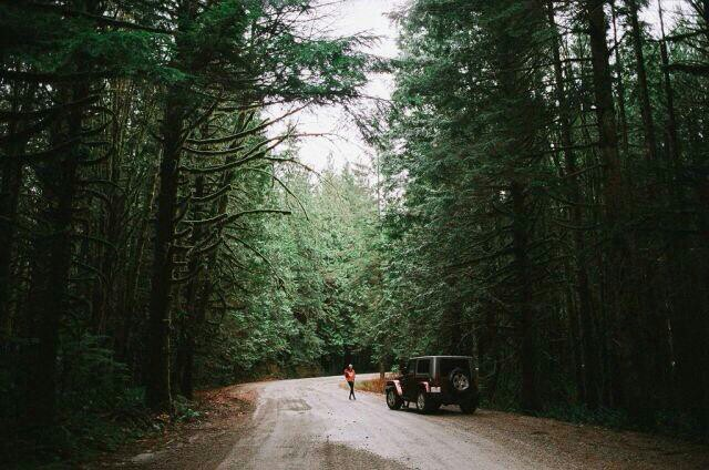 canyon, forest, jeep, road, travel, explore.