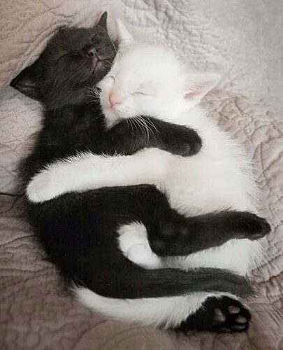 best friends, black and white, cat and cute