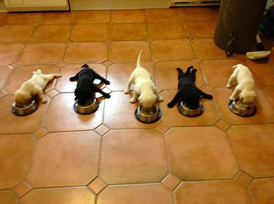 Puppies Image 2977629 By Rayman On