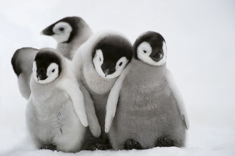 animal, aww, cute, love, nature, penguins, snow, First set