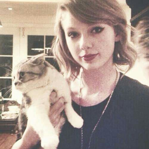 cat, meredith, music and taylor alison swift