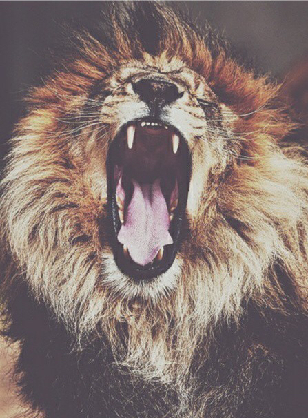 Lion hipster - photo#19