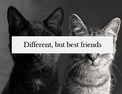 amazing, best, best friends and best time