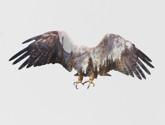 animal, art, art for sale, art print, artist, awesome, bird, bird of prey, birds, cabin, cool, decor, eagle, feathers, flying, forest, gift idea, groovy, home decor, mountains, nature, rad, raptor, snow, trees, trendy, wall art, wildlife, wings