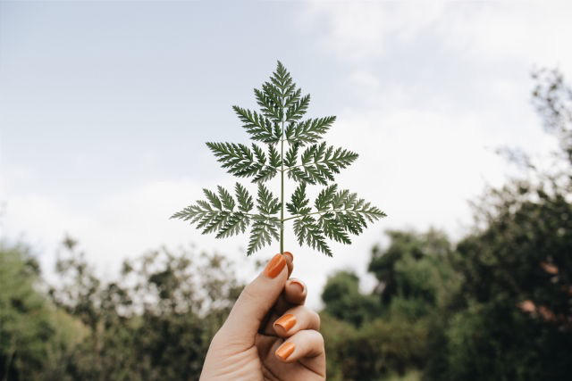 background, blue, branch, bright, cool, fern, forest, gently, girl, green, hand, hot, like, nature, nice, orange, photo, picture, plant, plants, pretty, summer, sweet, trees, tumblr, women, beautiful