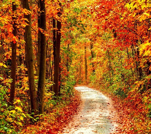 autumn, beautiful, colorful, fall, leaves, sweater weather ...
