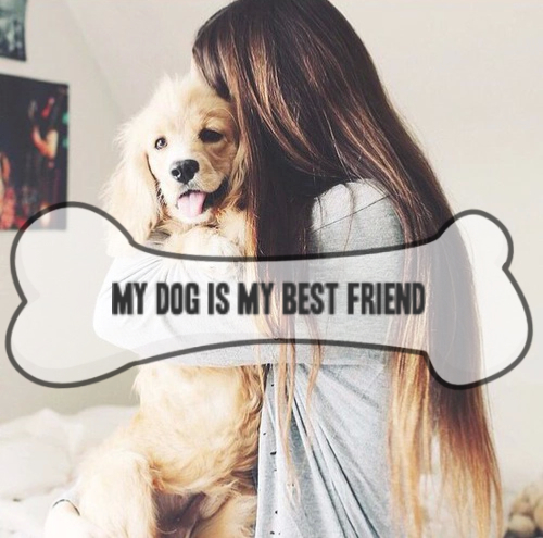 my dog my best friend 41 reviews of your dog's best friends we've been taking our dog, a very active goldendoodle, to your dogs best friend since february i was a little overwhelmed at first by the size of the place.