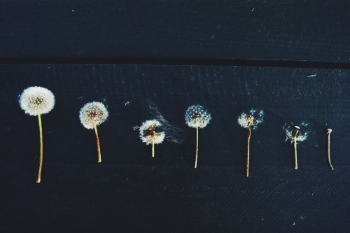 artsy, beatiful, black and withe, clothe, clothes, cool, dandelions, faded, fashion, flowers, girl, grunge, hair, hippie, hipster, indie, love, music, nature, pale, photography, rad, soft grunge, softgrunge, travel, tumblr, vintage, wanderlust, edite