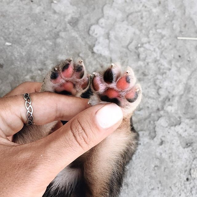 cat, kitty and paw