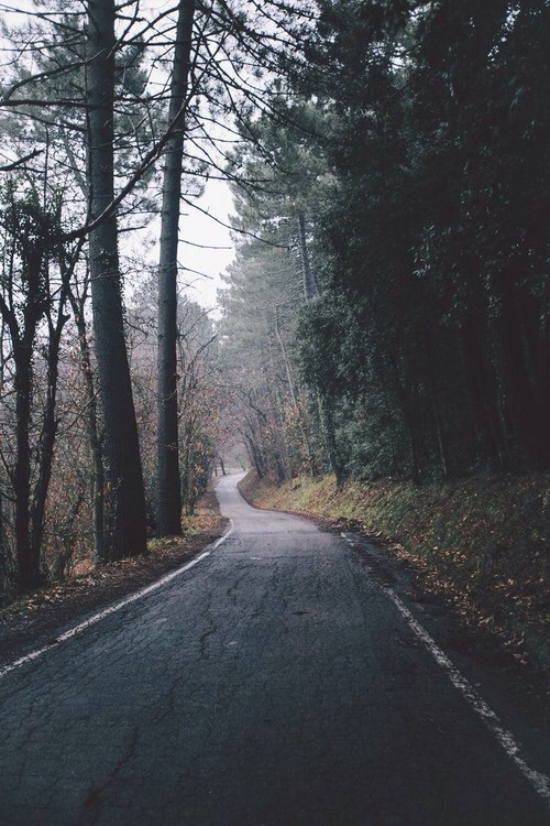 adventure, creepy, drive, explore, fog, forest, grunge, indie, mist, mystery, mystic, road, scary, trees, unknown, wander, way, young
