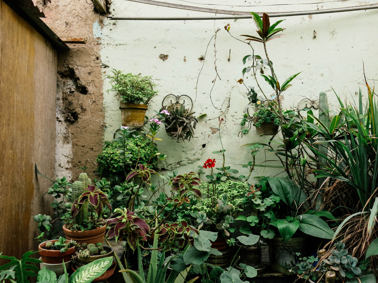 garden, green, photography and plants