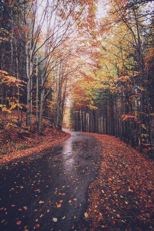 autumn, brown, cara delevigne, colour, colours, fall, green, land, leaf, leaves, mountain, one direction, orange, pastel, red, road, sky, snow, spring, street, summer, tree, trees, wet, winter, yellow, harrystyles
