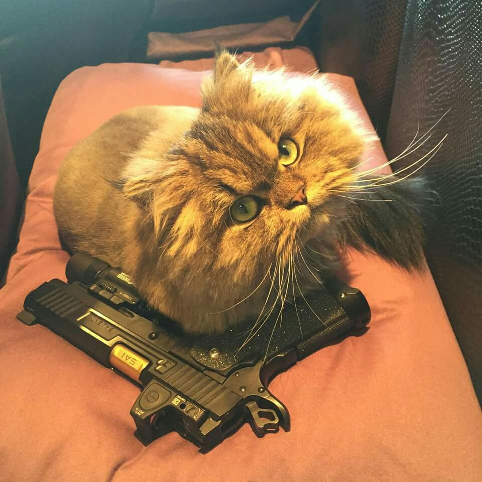 Cat With A Gun Pictures
