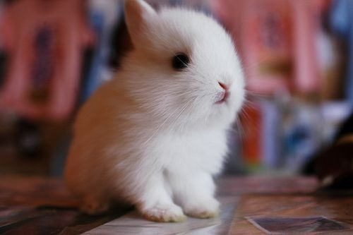 animals, bunny, cute, kawaii, love