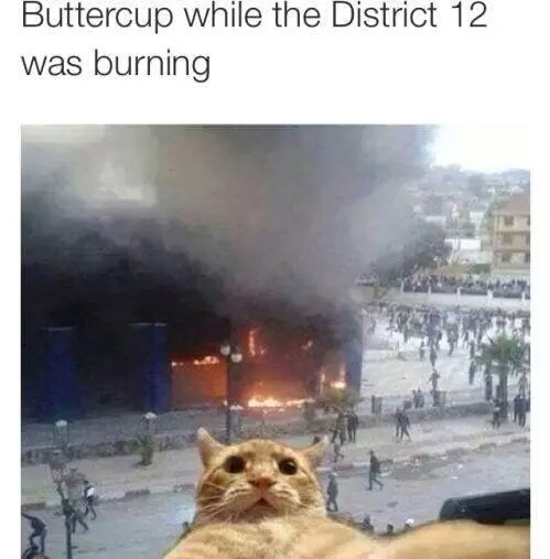 buttercup, district 12 and hunger games
