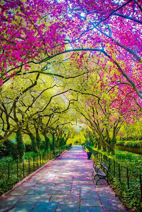 awesome, colors, cool, photo, photography, trees, vintage