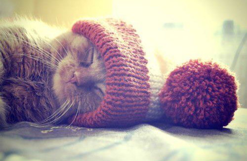 beanie, cat, cute, fashion