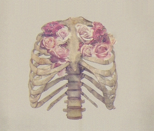 beautiful, bones, chest, cool, cute, flowers, heart, illustration, inspiration, inspiring, lung, photography, rib cage, ribcage, ribs, rose, roses, skeleton, vintage