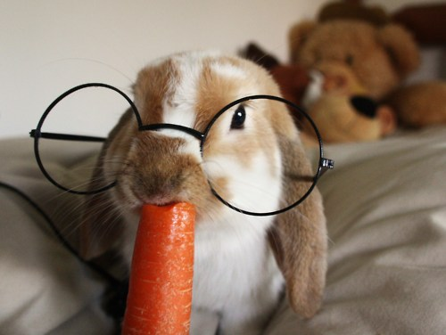 bed, carrot, cute, glasses
