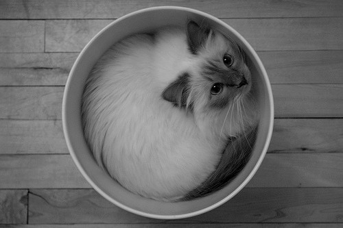 black and white, cat, cute, kitten - image #693838 on Favim.com