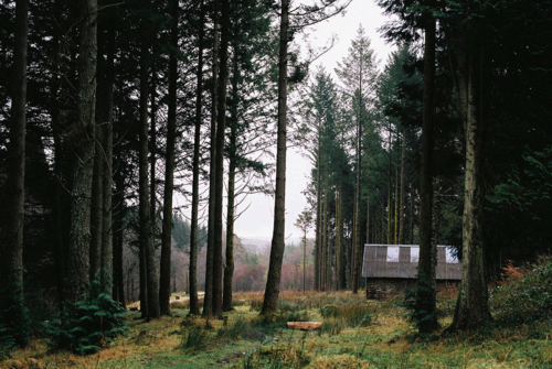 cabin, cottage, forest and forest cabin
