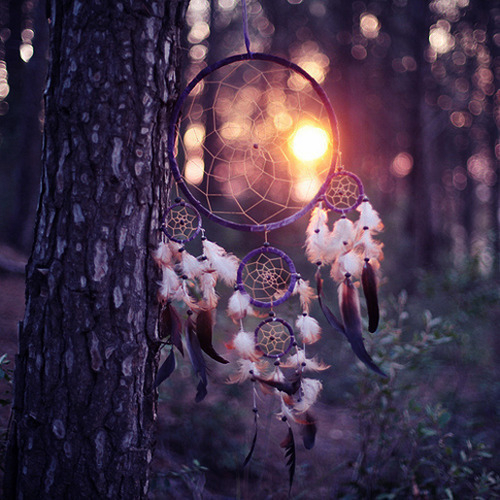 Dream Beautiful Dream Catcher Forest Image 673442 On
