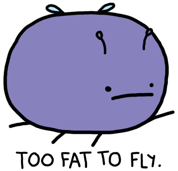 fat, fly and funny