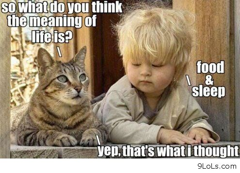 funny kids  funny memes  funny messages  funny photos  funny picturesFunny Pictures For Kids Of Cats