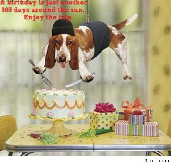 Animal Funny Birthday Quotes. QuotesGram