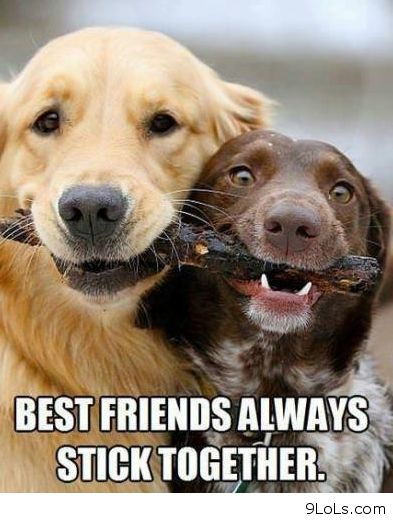 Funny dog quotes for kids - photo#1