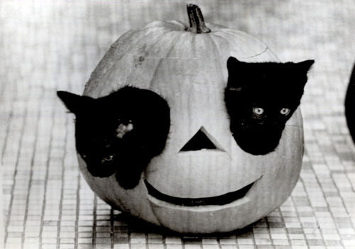 CATS AND HALLOWEEN - The Happy Place - Forums and Community